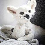 Animal Jigsaw Puzzles: Long Hair Chihuahua