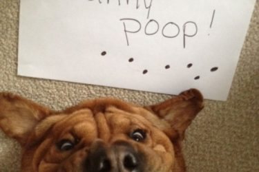 20 Funniest Dog Shaming Of All Time