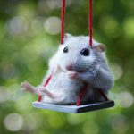 Animal Jigsaw Puzzles: Hamster On A Swing