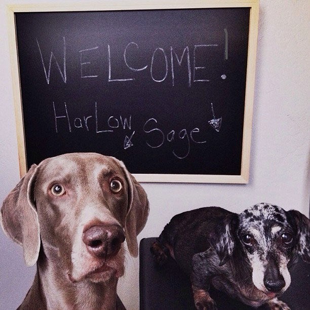 harlow-sage-and-indiana-3