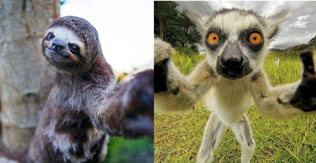 animal cuteness battle