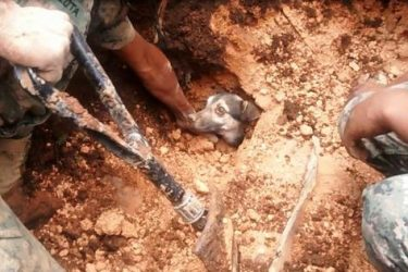 A Lucky Dog Is Found Alive After Being Buried by Mudslide