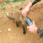 People Saving Animals