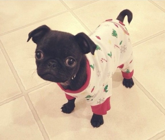 30 Cute Animals In Onesies