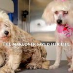 Partially Blind Stray Dog Receives Makeover To Save Her Life