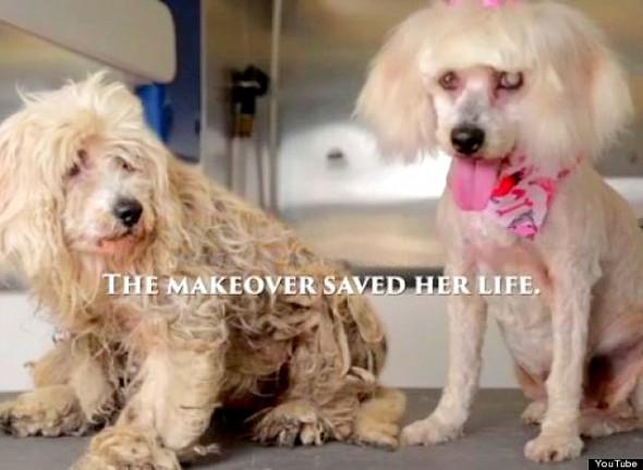 stray dog makeover