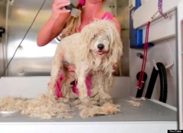 stray dog makeover3