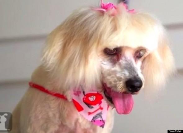 stray dog makeover5