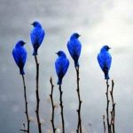Animal Jigsaw Puzzles: Beautiful Blue Birds