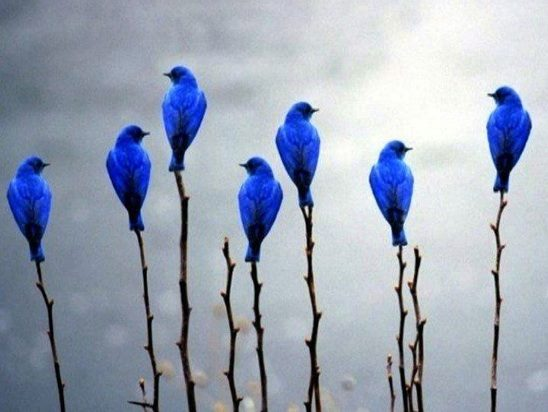 https://www.somepets.com/wp-content/uploads/2014/07/Beautiful-Blue-Birds.jpg