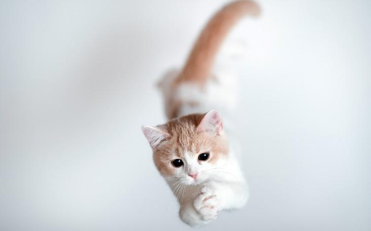 Jumping cats1