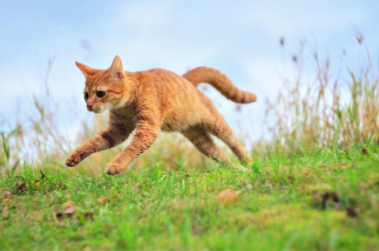 Jumping cats12