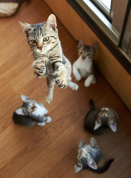 Jumping cats13