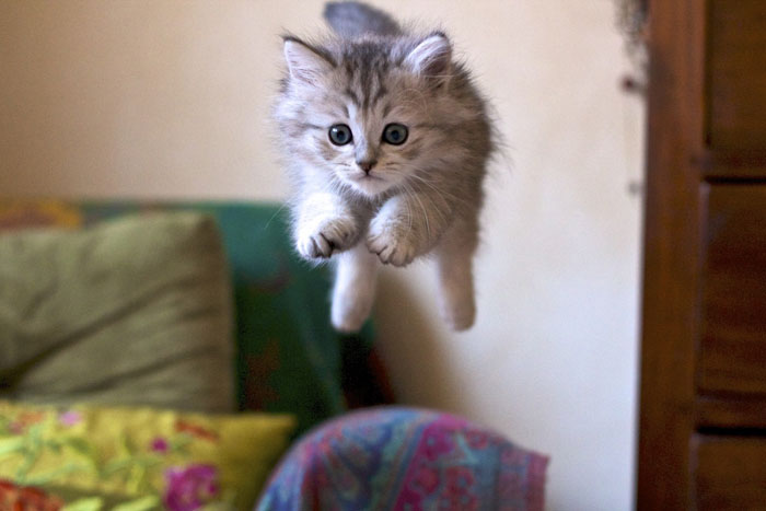 Jumping cats14