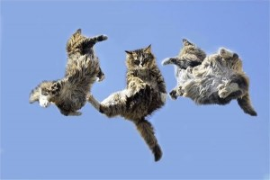 Jumping cats15