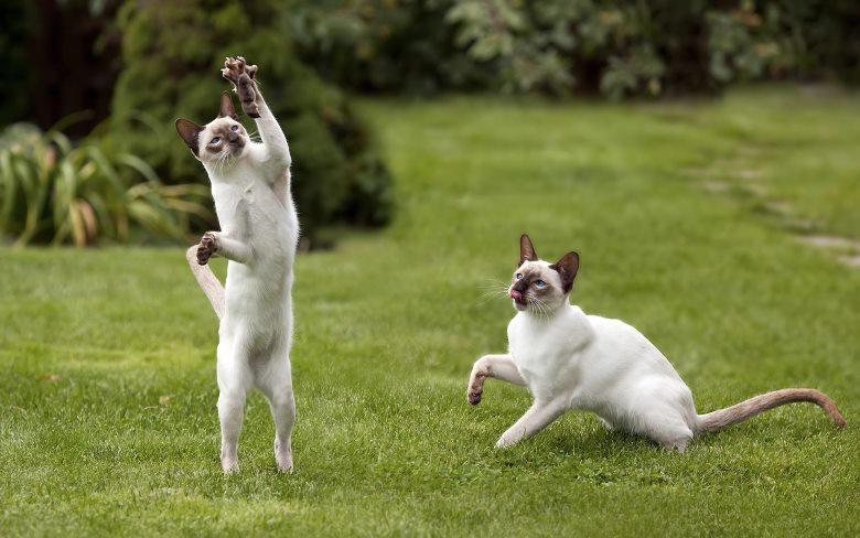 Jumping cats16