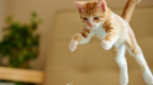 Jumping cats18