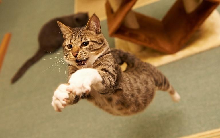Jumping cats19