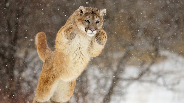 Jumping cats2