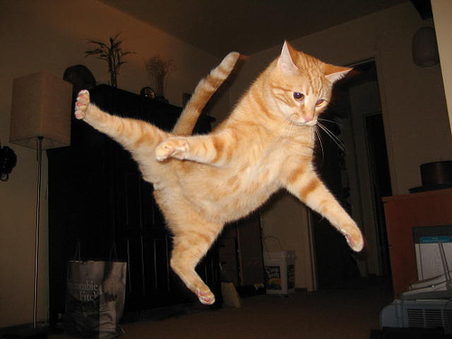 Image result for jumping cat