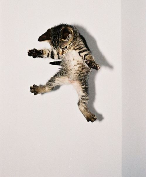 Jumping cats21