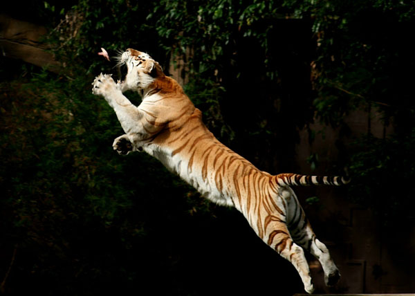 Jumping cats25