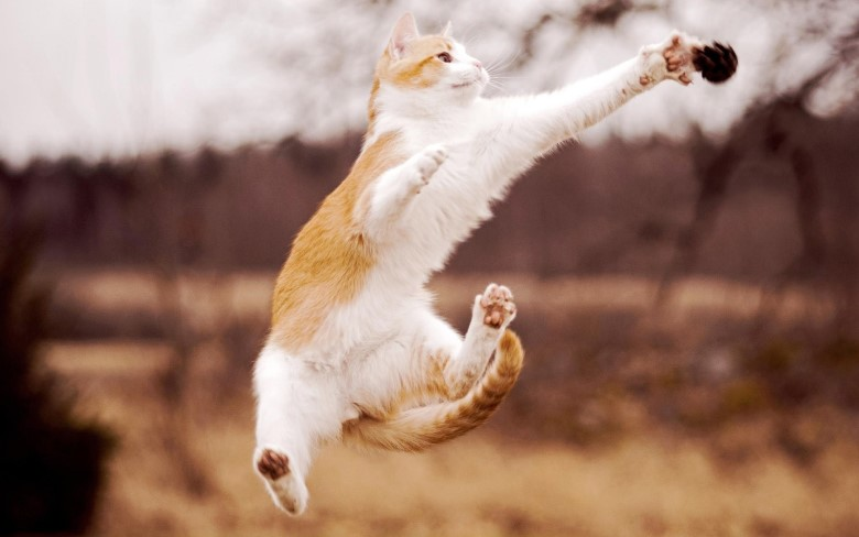 Jumping cats3
