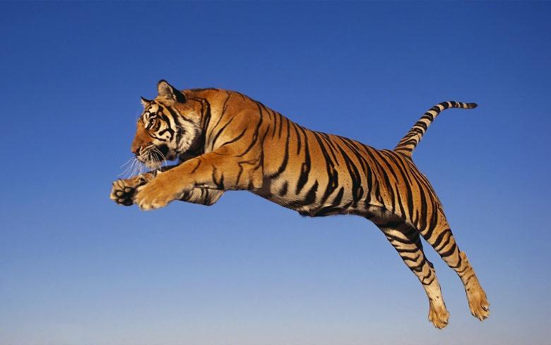 Jumping cats5
