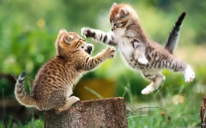 Jumping cats6