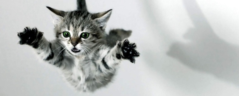 Jumping cats8