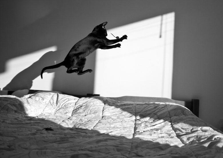 Jumping cats9