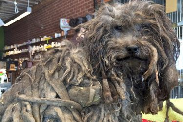 A Terrified Dog Abandoned by His Owners Gets Rescued By Hope For Paws