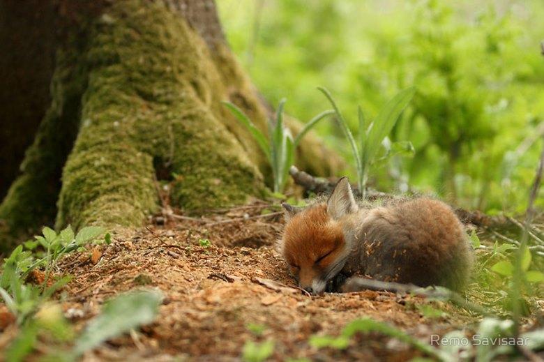 amazing-fox-photos-11