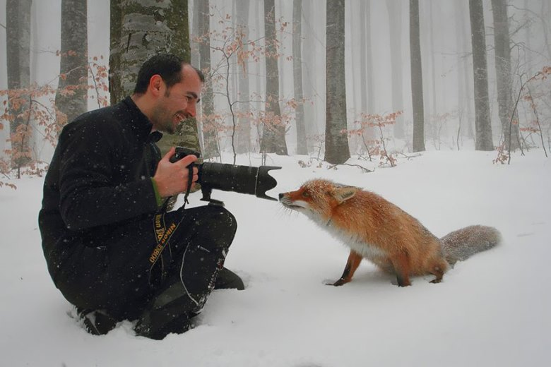 amazing-fox-photos-20-1
