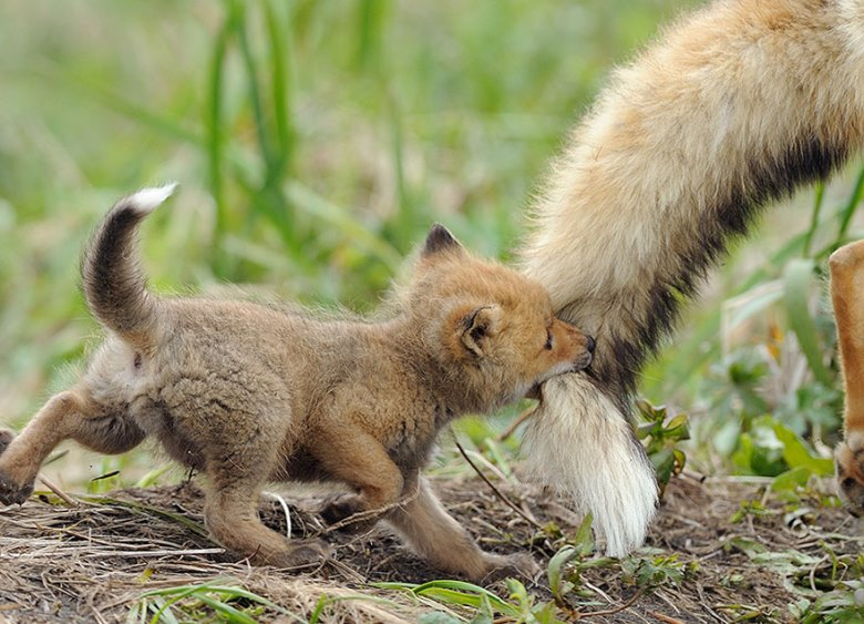 amazing-fox-photos-6