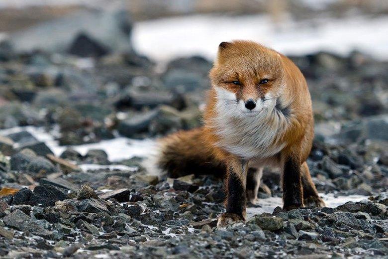 amazing-fox-photos-8