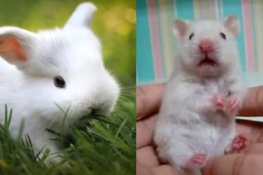 Animal Cuteness Battle – Fluffy White Bunny vs Cute White Mouse
