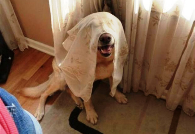 dog playing hide and seek