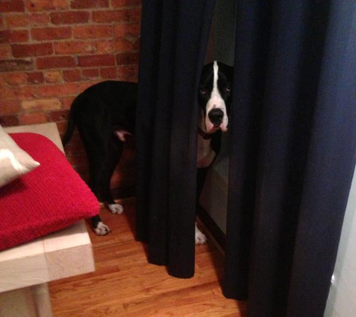 dog playing hide and seek1