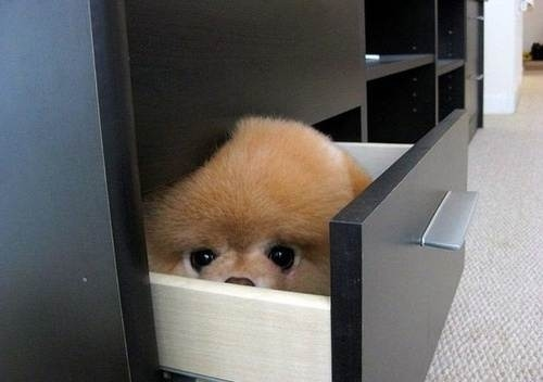 dog playing hide and seek3