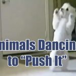"Hilarious Animals Dancing To Salt-n-Pepa's ""Push It"""