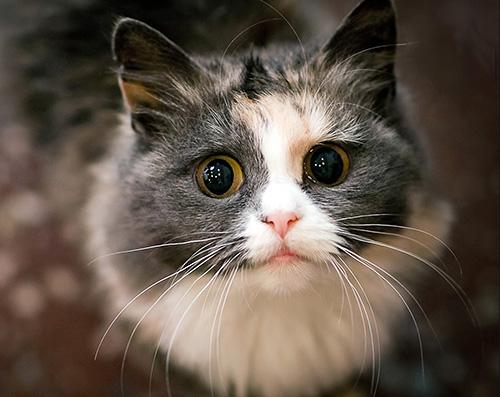 Cat Quiz 1