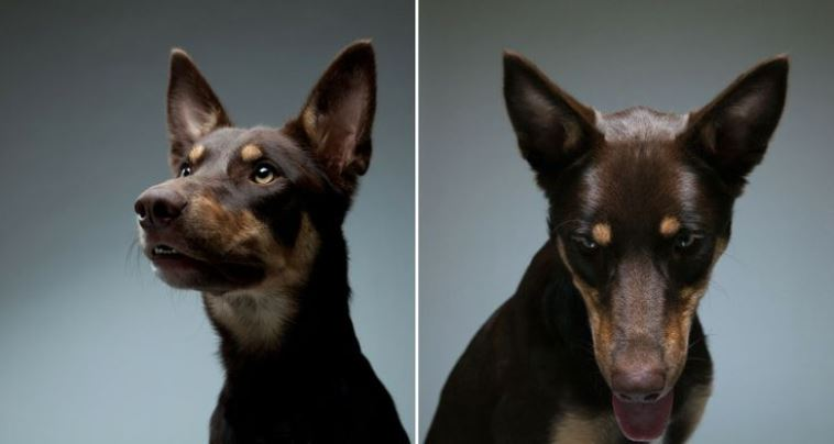Gerrard Gethings beautiful dog portraits