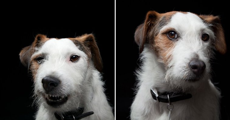 Gerrard_Gethings_beautiful_dog_portraits13