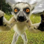 The Best Ever Animal Selfies