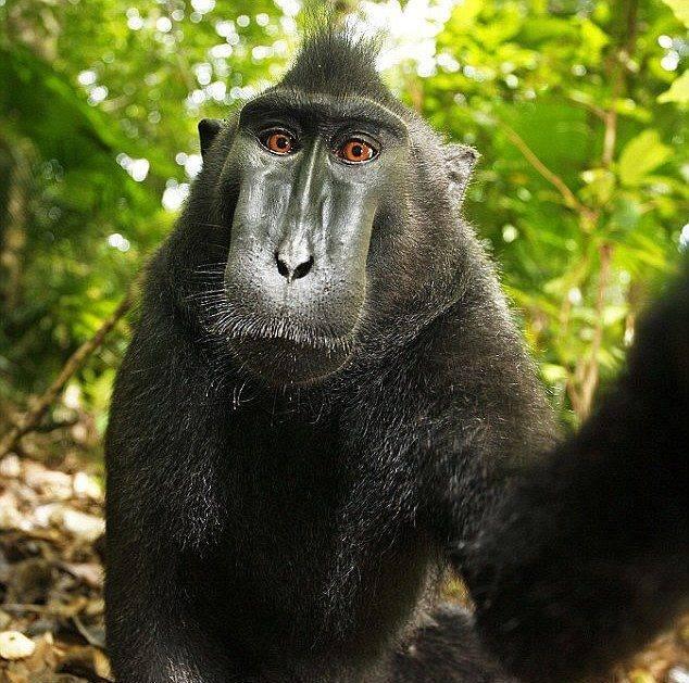 baboon selfie
