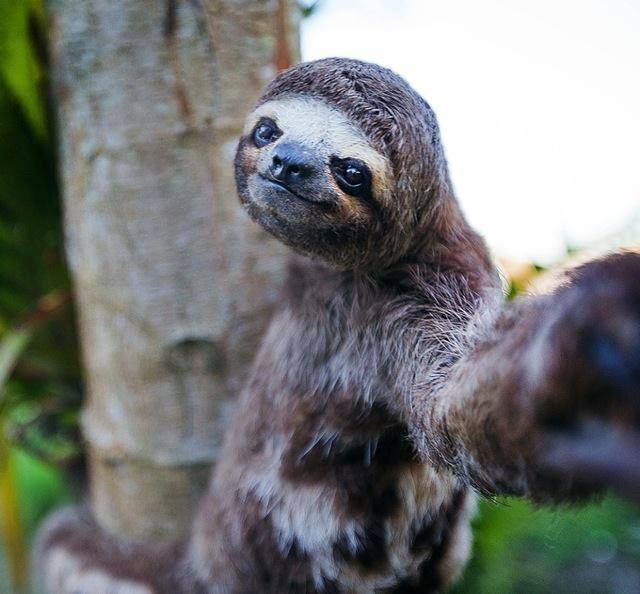 beautiful sloth selfie