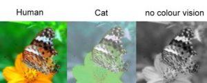 cat colour spectrum