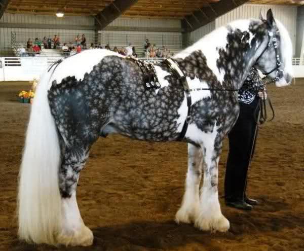 chimera horse2