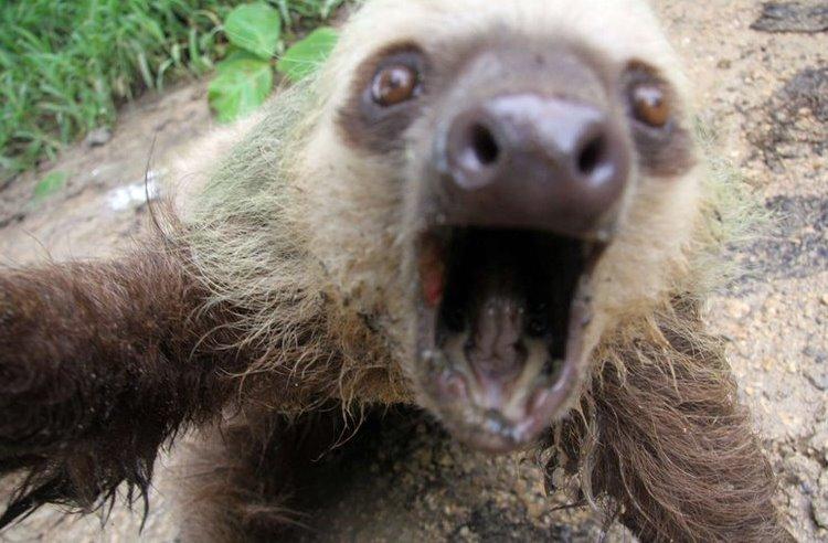 crazy sloth selfie